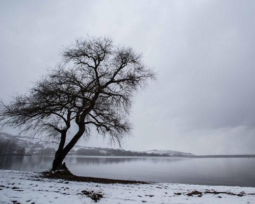 Winterstimmung am Ufer des Murtensees in Salavaux