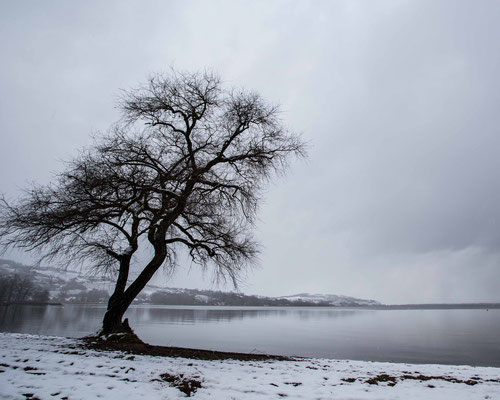 Winterstimmung am Ufer des Murtensees in Salavaux
