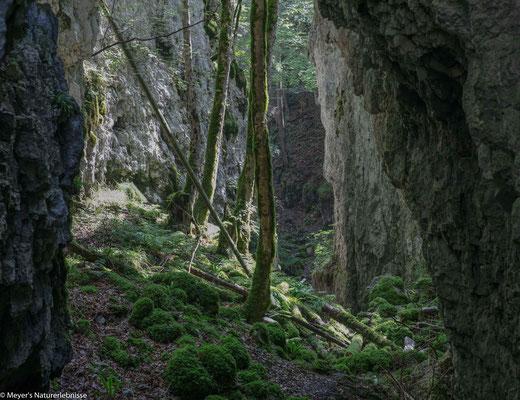 Naturparadies Schweiz