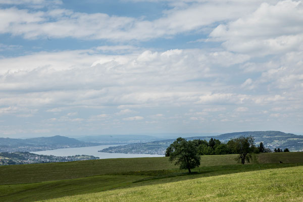 Der Zürichsee von Buel aus gesehen
