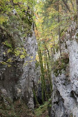 Die unbekannte Waldschlucht von Cremines