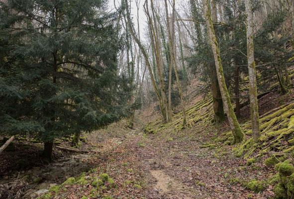 Der Naturwald im Vallée d' Engens