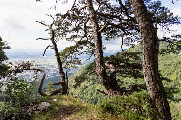 Unterwegs mit Sicht auf Grenchen und den Bielersee im Hitergrund