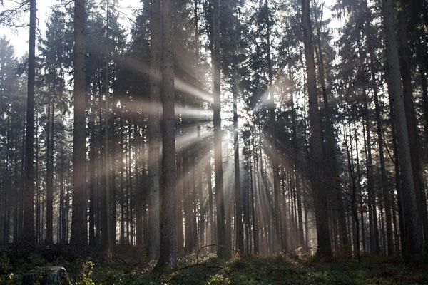Herbststimmung im Frienisbergwald