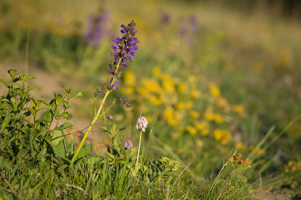 Orchideenwiesen am Wipperdurchbruch