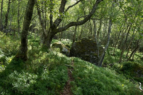 Sjunkfjordalen (Sjunkhatten NP)