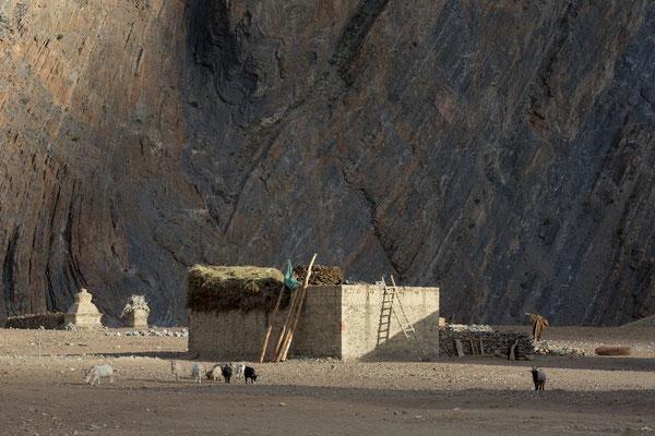 Pidmo, Zanskar, Indien