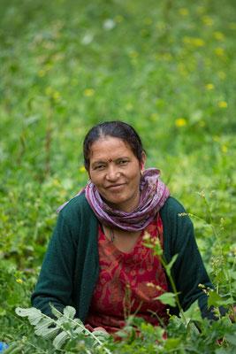 Die Lehrerin bei der Erbsenernte, Urgos, Indien