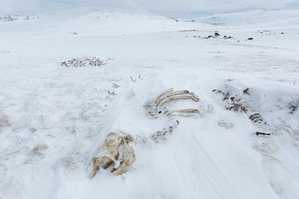 Leirungsmyrin, Jotunheimen, Oppland, Norwegen