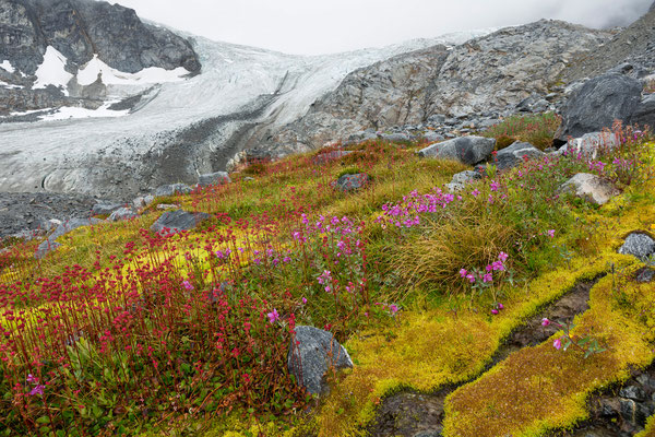 Septentrion Valley, Pegasus Icefield