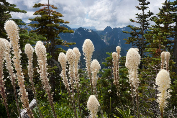 Beargrass, Tatoosh Range