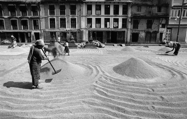 Reistrocknung, Kathmandu, Nepal