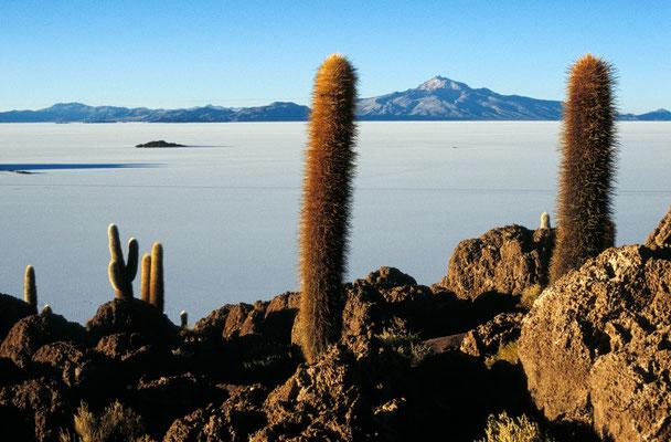 Isla Pescado, Salar de Uyuni, Bolivien