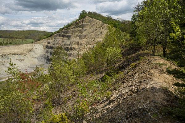 Finnberg