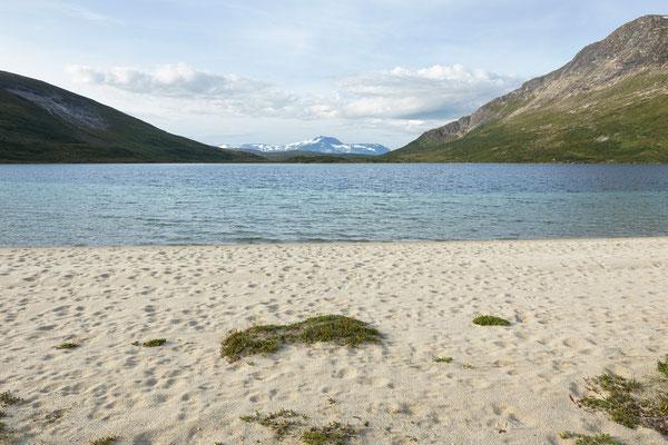 Renspuren am Store Sandvatnet (Lurfjell)