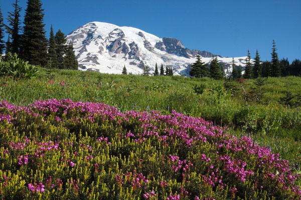 Mount Rainier, Paradise