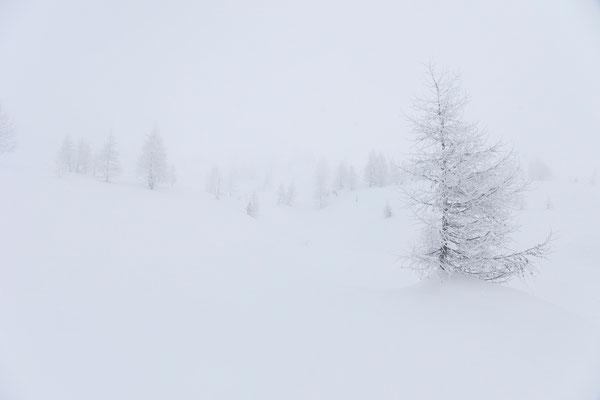 Piano dei Turnitt, Valle di Campo