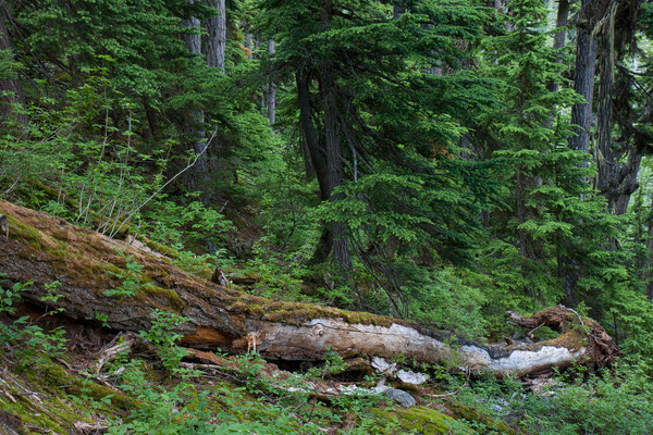 Rogers Pass, Selkirk Mountains, Glacier NP