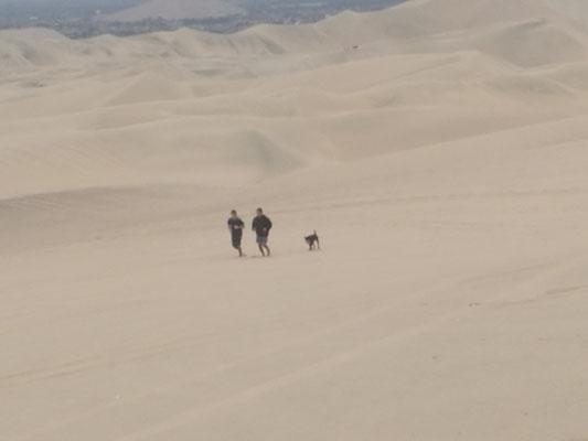Joggen in der Wüste?! Selbst der Hund kann nicht mehr!
