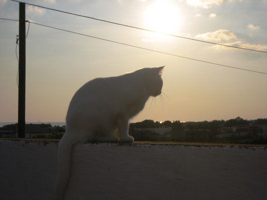 Bo genießt den Sonnenuntergang