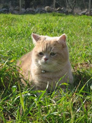 Nils im Garten