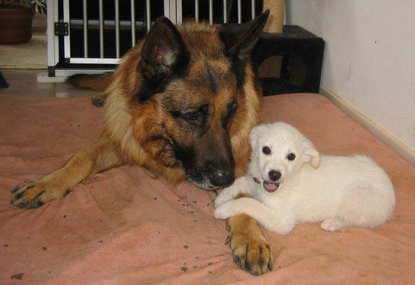 Hunde-Liebe