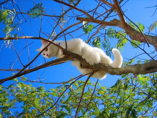 "Kater ""Bo"" im Baum"