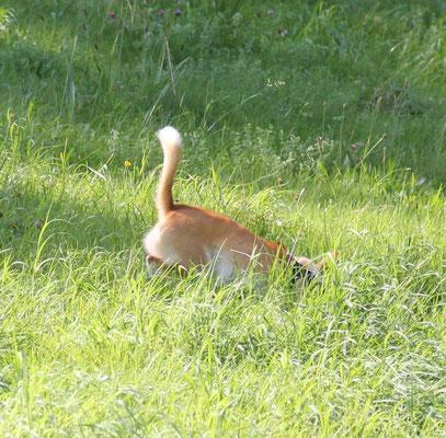 Stella - fast sieht man sie nicht im Gras