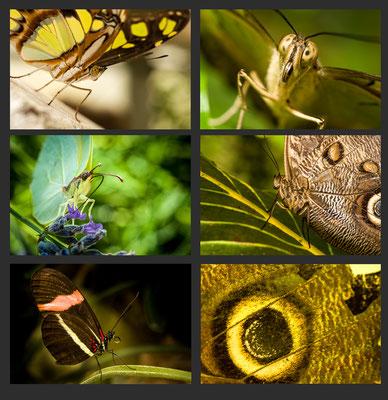 Schmetterlinge, Autor: Udo Stoeter