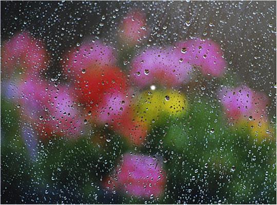 "2014 Januar, ""Regentropfen""©Kurt Edler"