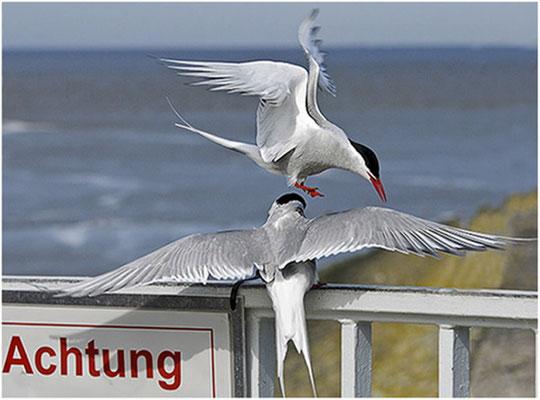 """2012 Juni, """"Achtung""""©Christa Johannsen"""
