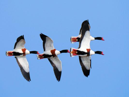 """""""Flugbild""""©Gerd Johannsen"""
