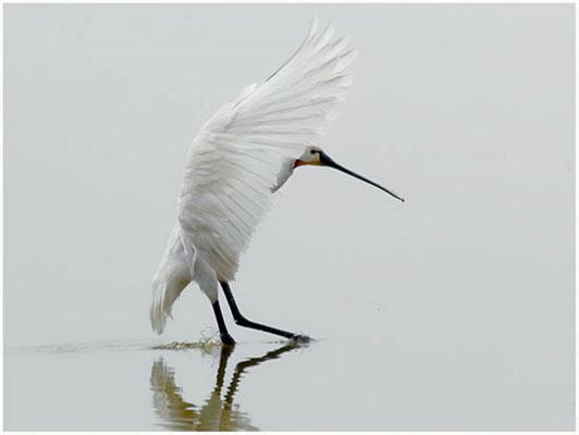 """2012 März """"Landung""""©Gerd Johannsen"""