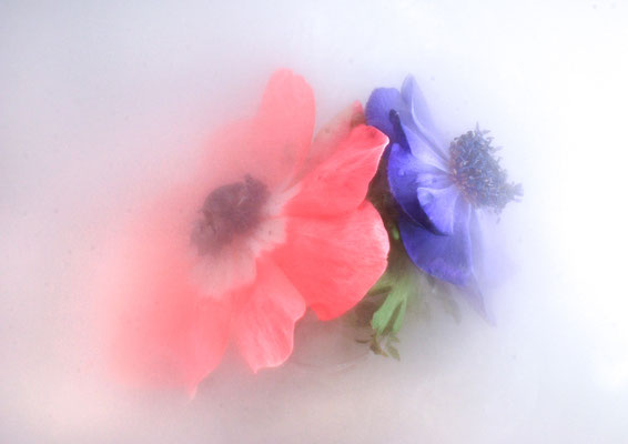 """""""rot-blau""""©Kurt Edler"""