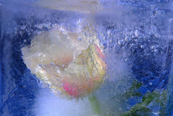 """Tulpe im Eis""©Kurt Edler"