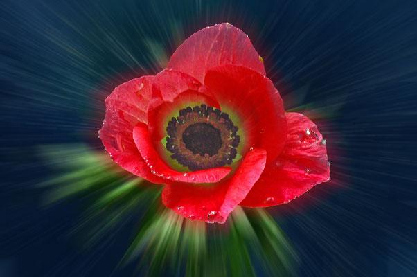 """""""Anemone""""©Kurt Edler"""