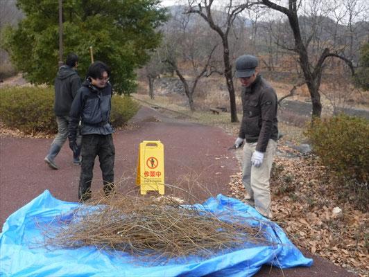 屋内用の柳かざりは、許可を得て公園の剪定枝を使用しています。