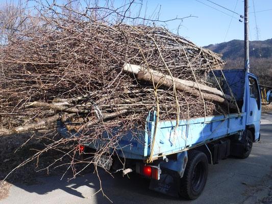 繭玉かざりのベースとなる枝木は、地主さんや建設会社の協力により桜をはじめとする広葉樹をメンバーが間伐します。展示場所に合わせて大まかにサイズを整えます。