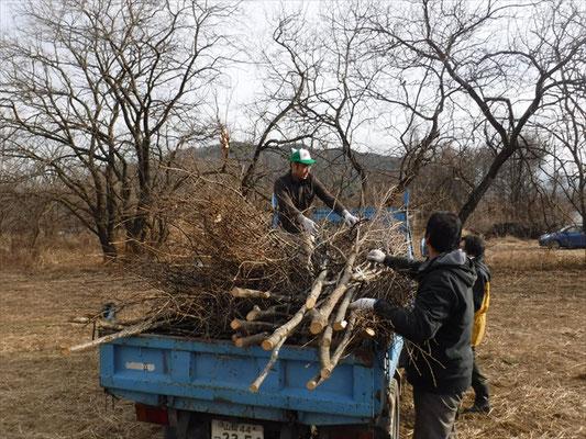 桜をはじめとした広葉樹の間伐材を200セット切出し、運搬します。