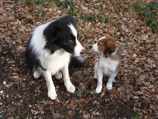 Marley und Flash - beste Freunde