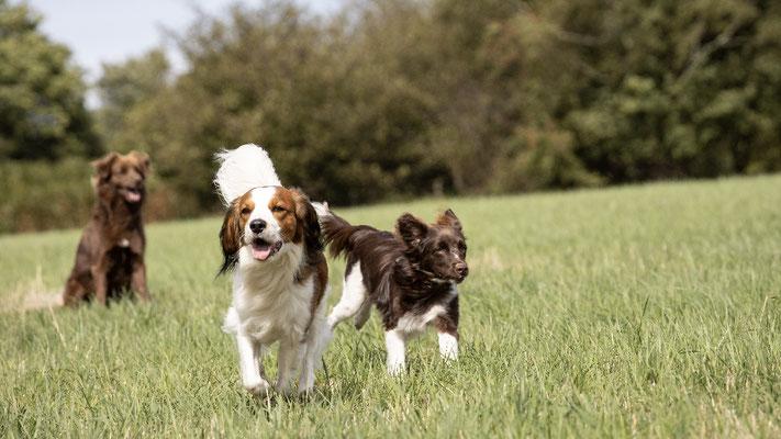Chico, Flash und Baxter