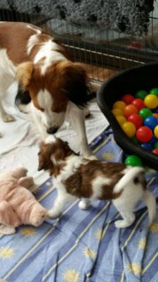 Flash zu Besuch bei seinen kleinen Geschwistern