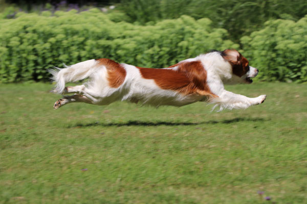 Flying Flash