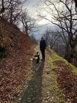 Leia und Flash auf dem Urwaldsteig (Edersee)