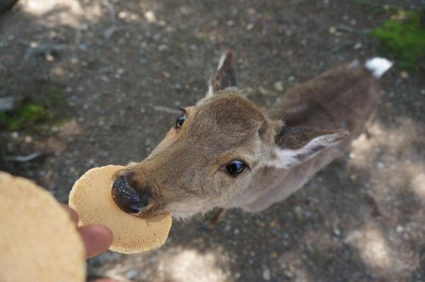 鹿せんべい