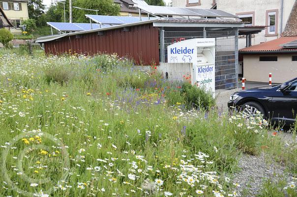 Wildblumenwiese am Supermarkt heute