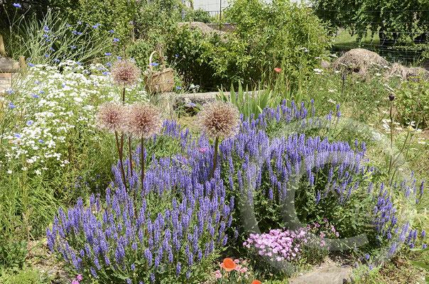 Gartenansichten