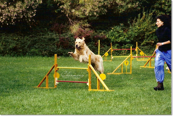 Agility-Training beim HSV Pulsen