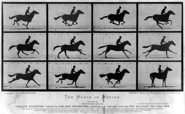 Eadweard Muybridge - The Horse in motion