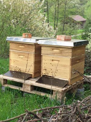 zwei Dadantbeuten mit einem Honigraum auf Paletten